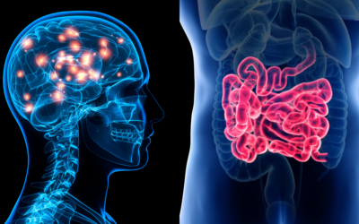 The Gut-Brain Connection And Migraine